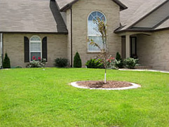 Lawn Service in O'Fallon, Illinois